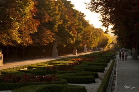 Evening sun light illuminates the Paseo Argentina in the Parque del Retiro, Madrid, Spain.